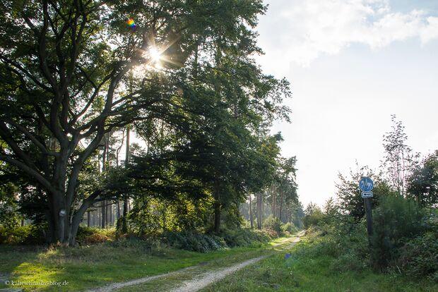OD-KEEN-Durand-Leseraktion-Silvana-2014-18 (jpg)