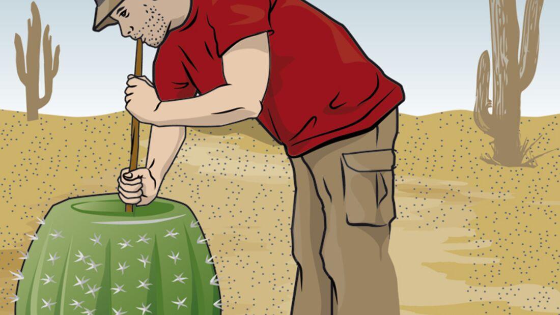 OD-Kaktus3 (jpg)