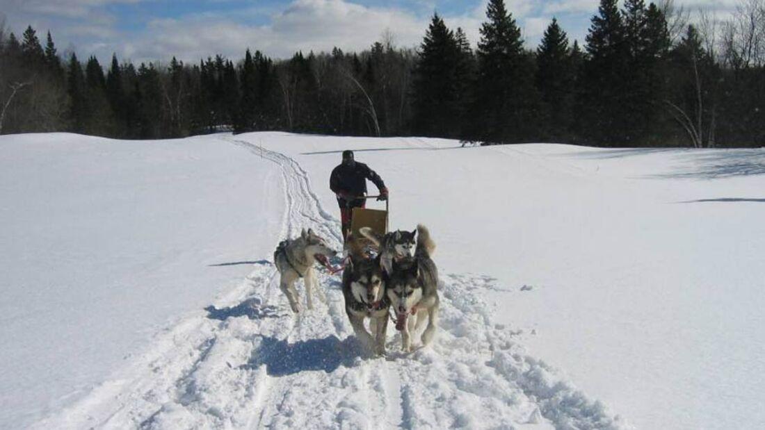 OD Musher Hundeschlitten Winter