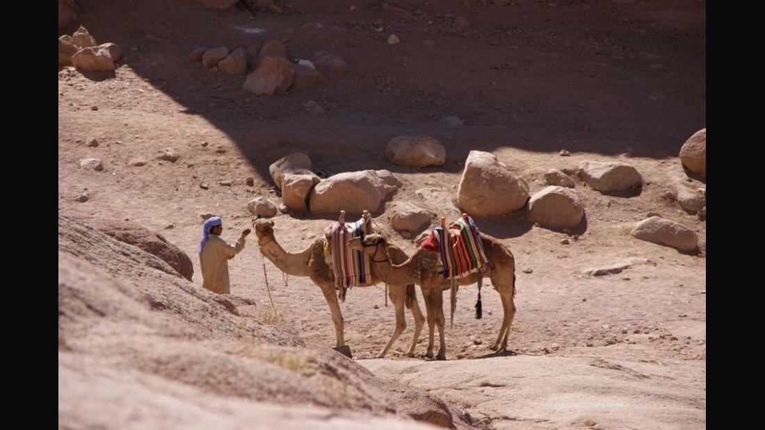 OD Orient - Wüste - Kamel