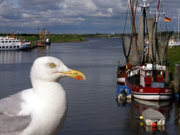 OD Ostfriesland Möwe Nordsee pixelio