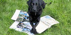 OD Reisen Urlaub Hund Tiere