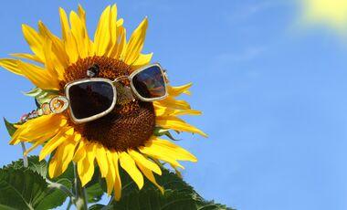 OD Sonne Sonnenbrille Sonnenblume UV-Schutz