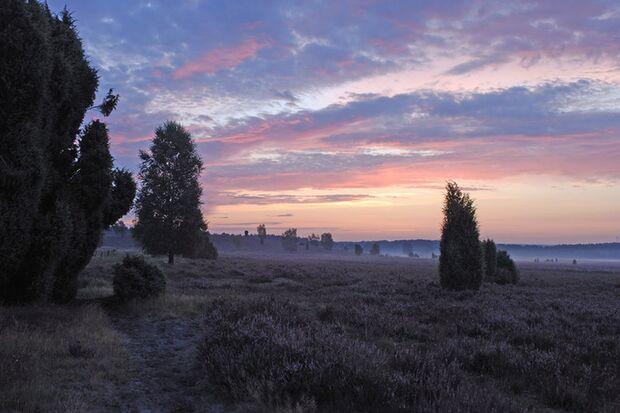 OD Sonnenuntergang in der Lüneburger Heide