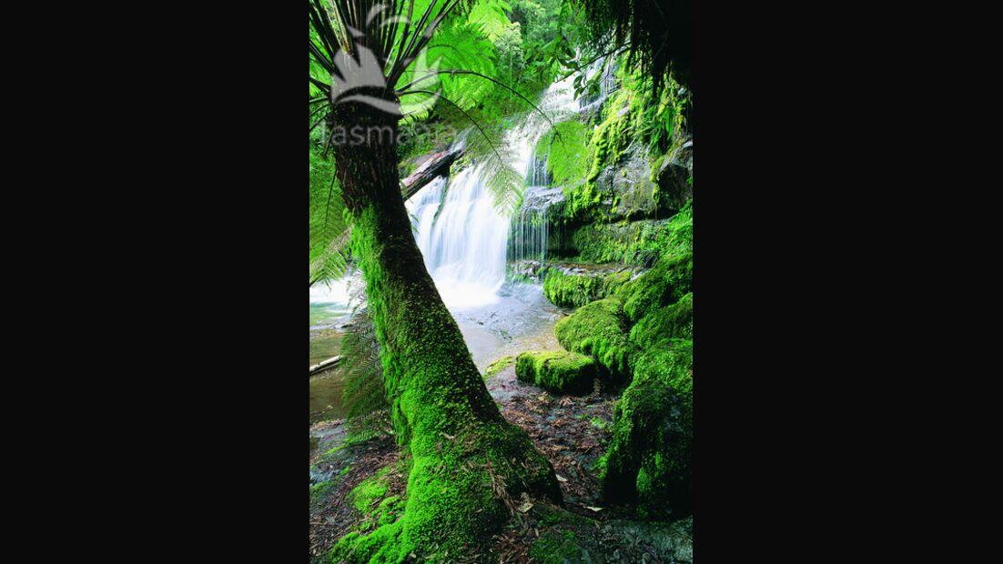 OD Tasmanien Baum und Wasserfall