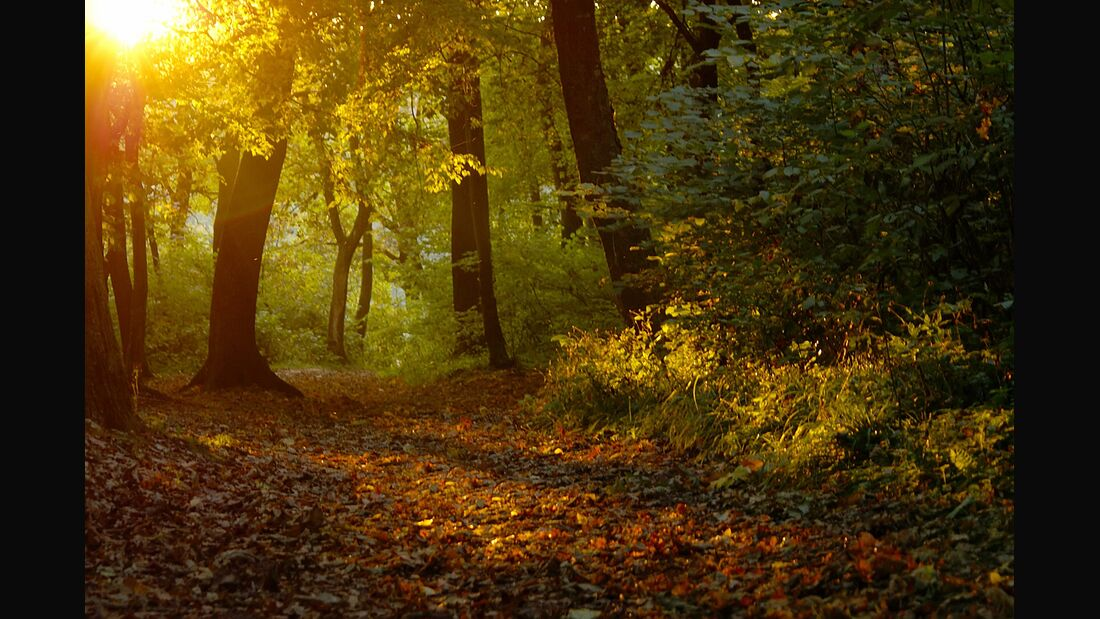 OD Wald Sonne Bäume Landschaft