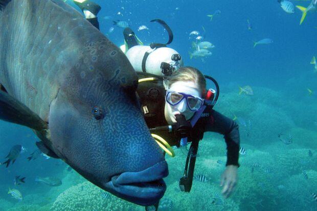 OD-Whitsundays-fish-scuba-diver (jpg)