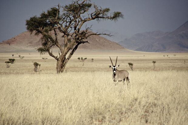 Outdoor-Abenteuer in Namibia