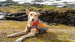Outdoor-Zubehör für den Hund