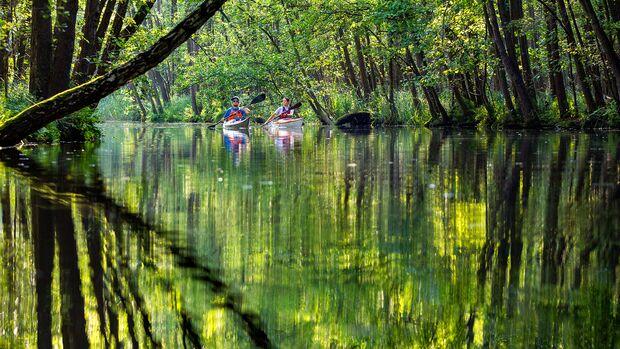 Paddeltour in der Feldberger Seenlandschaft