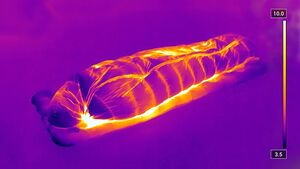Schlafsack Test 2019 - Wärmebildaufnahme