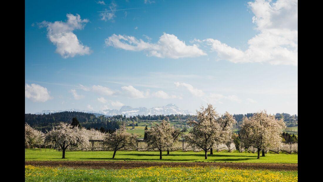 Switzerland Spring: Egnach, Bluescht