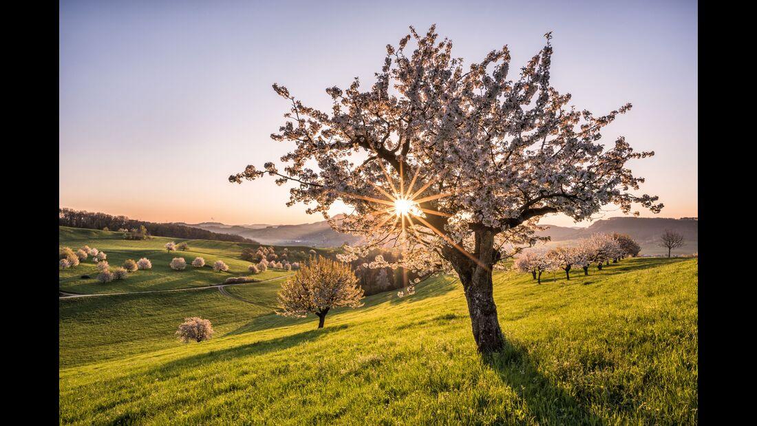 Switzerland Summer: Frick, Kirschbaumbluete