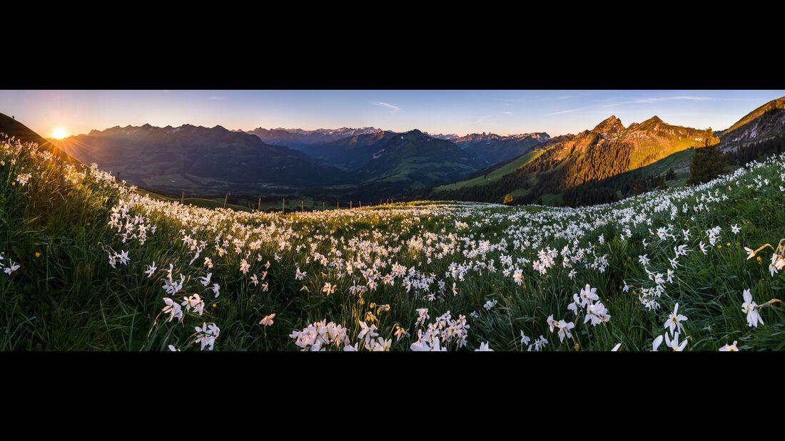 Switzerland Summer: Haut-Intyamon, Narzissen Panorama