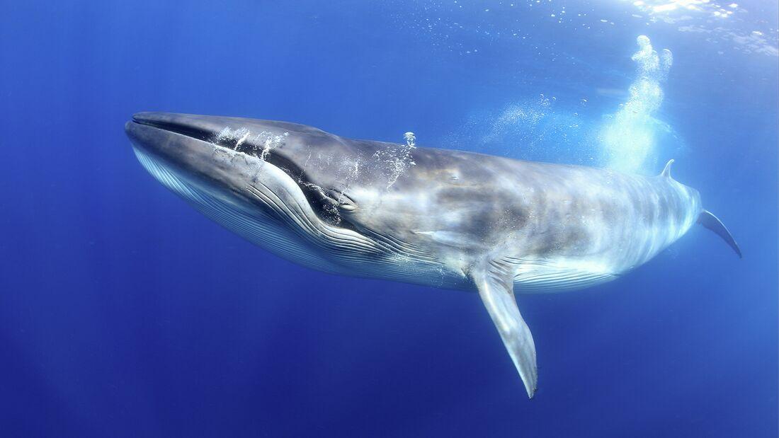 Teneriffa Waldschutzgebiet, Wale