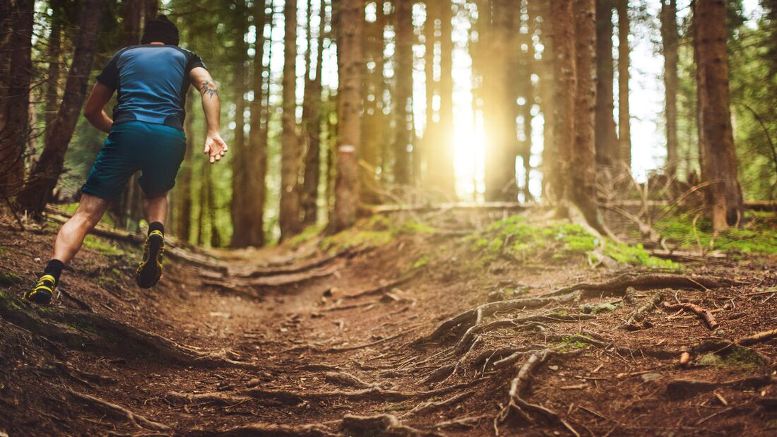 Trailrunning im Wald
