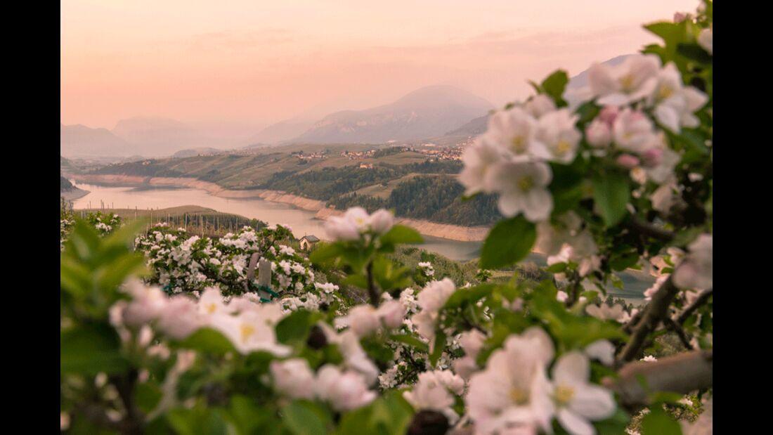 Val di Non - Lago di Santa Giustina - Meleti in fiore