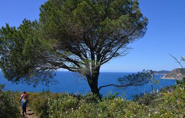 Wandern auf der Insel Elba