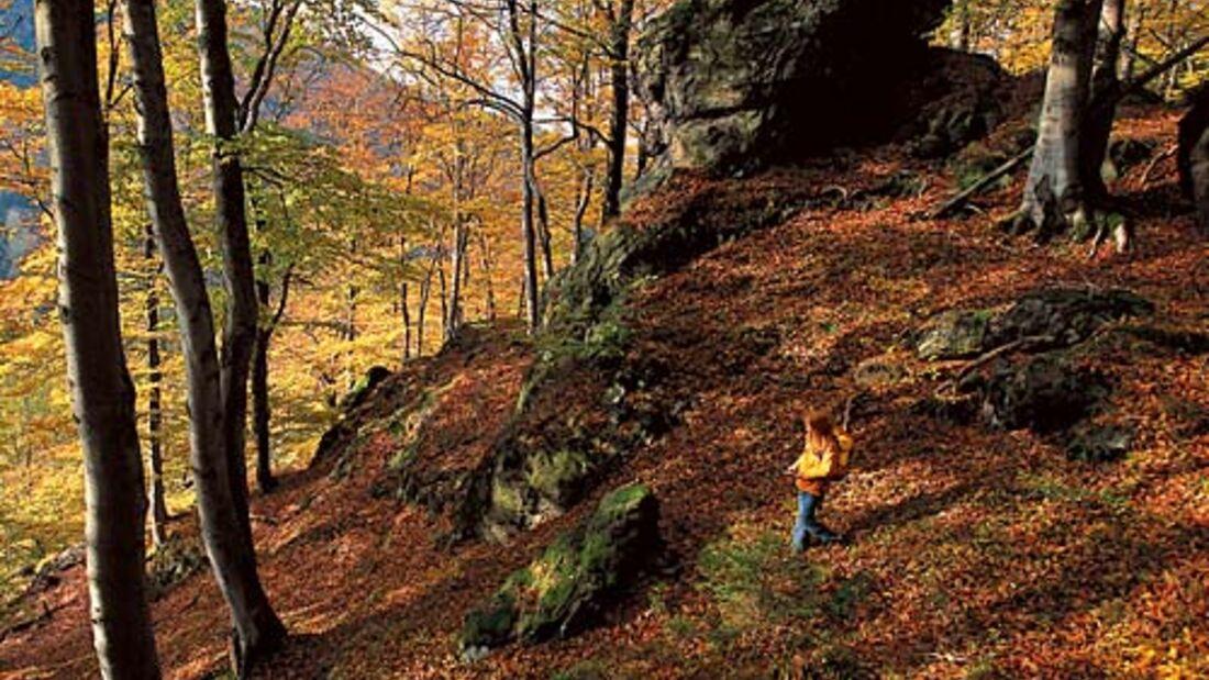 Wandern im Harz: Die schönsten Herbsttouren