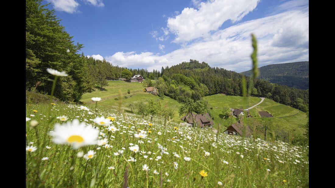 Wandern in Baden-Württemberg: Schwarzwaelder-Wandersinfonie-Wiesensteig