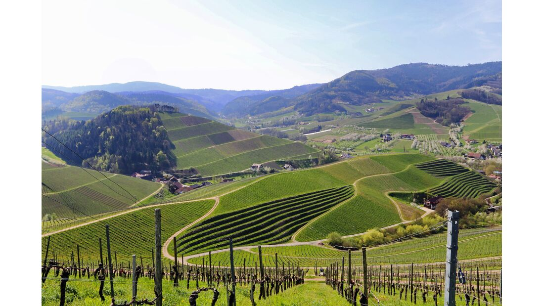 Wandern in Baden-Württemberg: Weinberge in der Ortenau