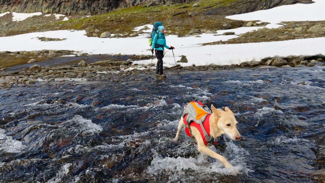 Wandern mit Hund - Tipps