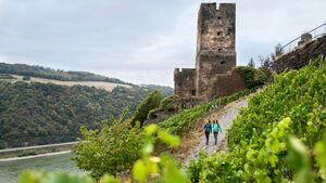 Weinwandern auf dem Rheinsteig