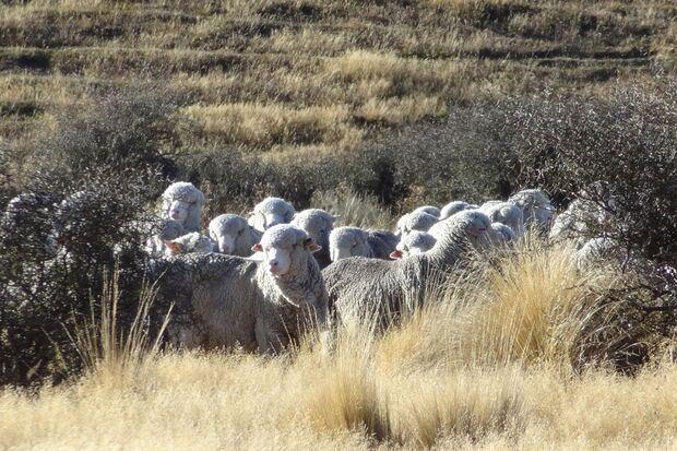 Woher kommt die Wolle für Reda Rewoolution? 10