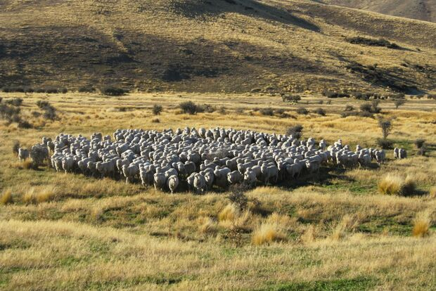 Woher kommt die Wolle für Reda Rewoolution? 5