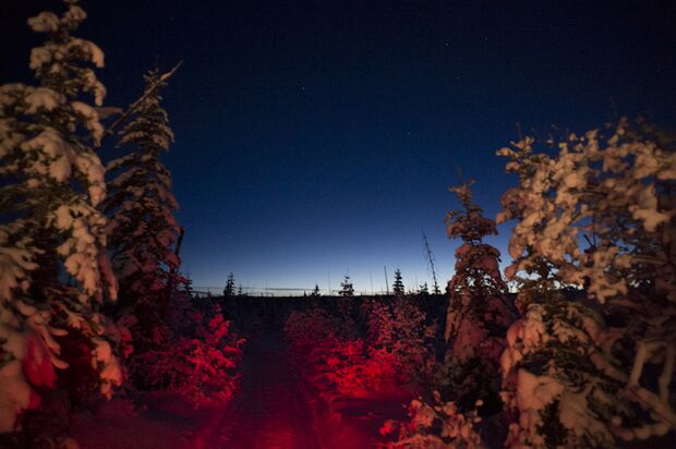Yukon Arctic Ultra - das kälteste Rennen der Welt 24