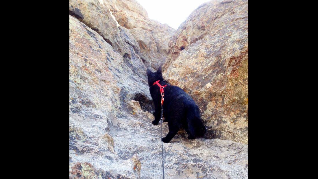 kl-craig+millie-kletternde-katze-climbing-cat (jpg)