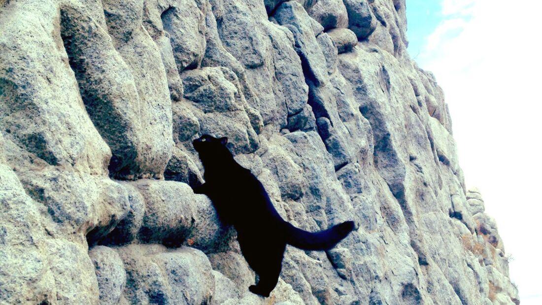 kl-craig+millie-kletternde-katze-ferguson-canyon-2 (jpg)