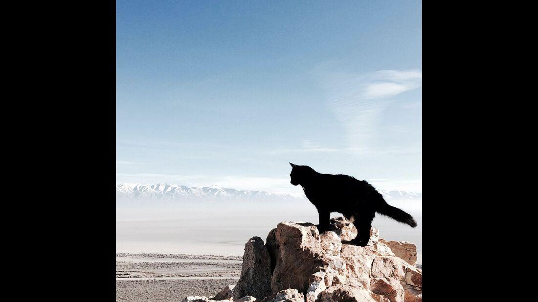 kl-craig+millie-kletternde-katze-insta-panorama