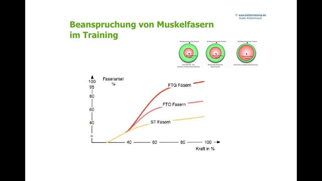 kl-klettertraining-trainings-periodisierung-koestermeyer-beanspruchung-muskelfasern-slide-13 (jpg)