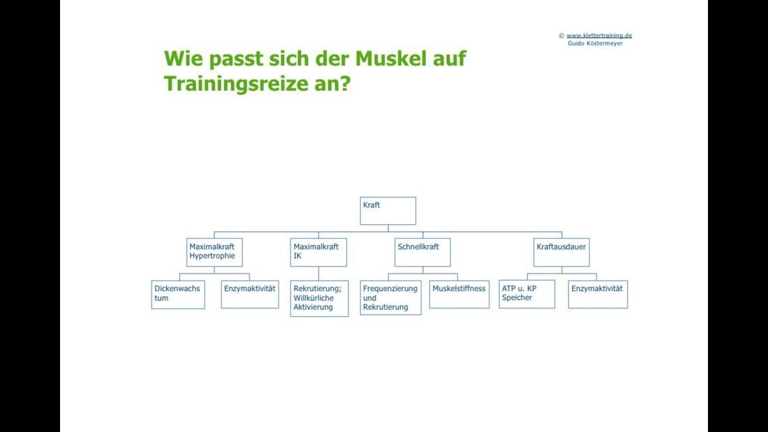 kl-klettertraining-trainings-periodisierung-koestermeyer-muskel-trainingsreize-slide-4 (jpg)