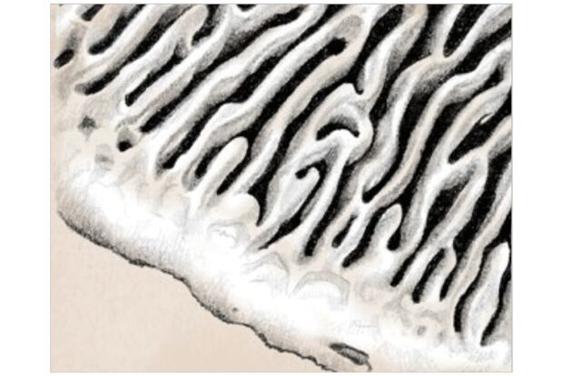 od-1018-pfalz-pilze-labyrinthische-poren (jpg)