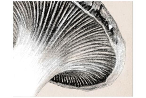 od-1018-pfalz-pilze-lamellen (jpg)