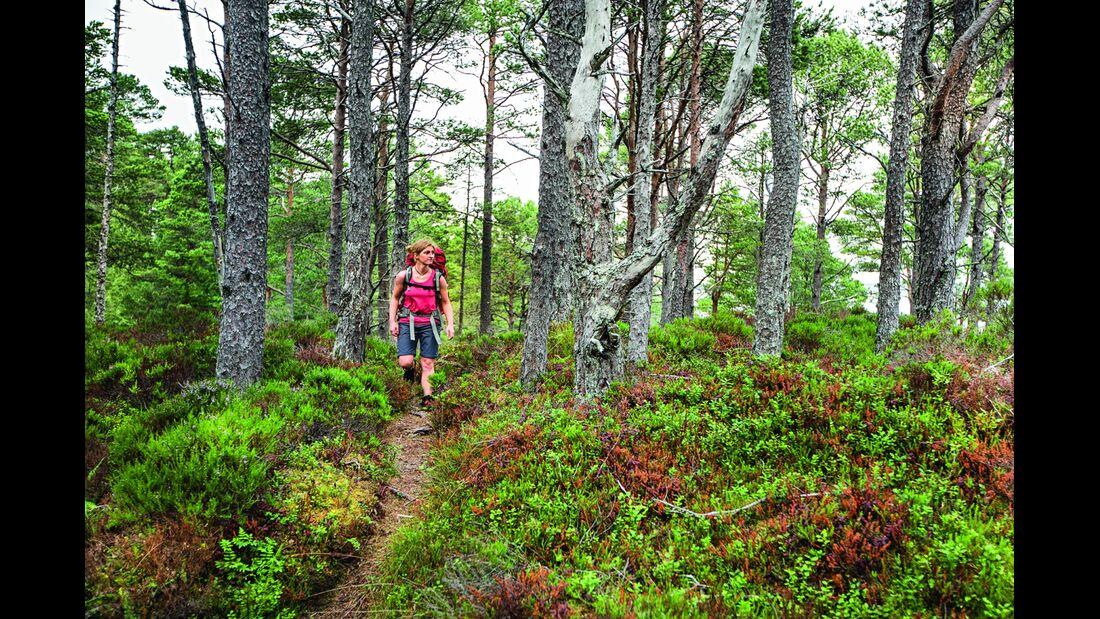 od-1214-norwegen-trek-fjordruta-wald-seivika (jpg)