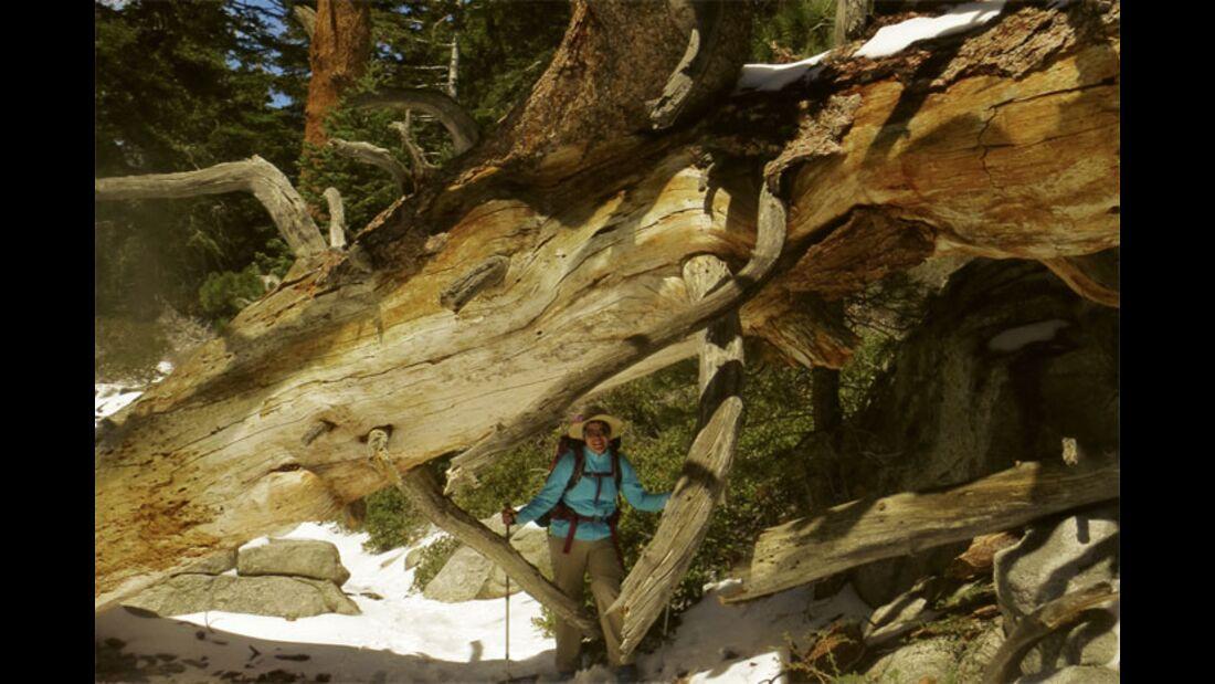 od-2015-pacific-crest-trail-8h (jpg)