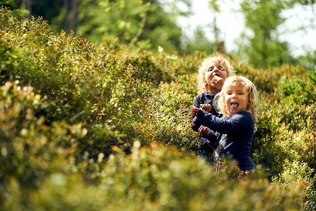 od-2019-bayern-family-bayerischer-wald-Felgenhauer,-woidlife-photography (jpg)