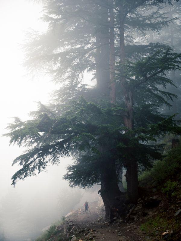 od-himalaya-trip-alessandro-rovere-alive-08 (jpg)