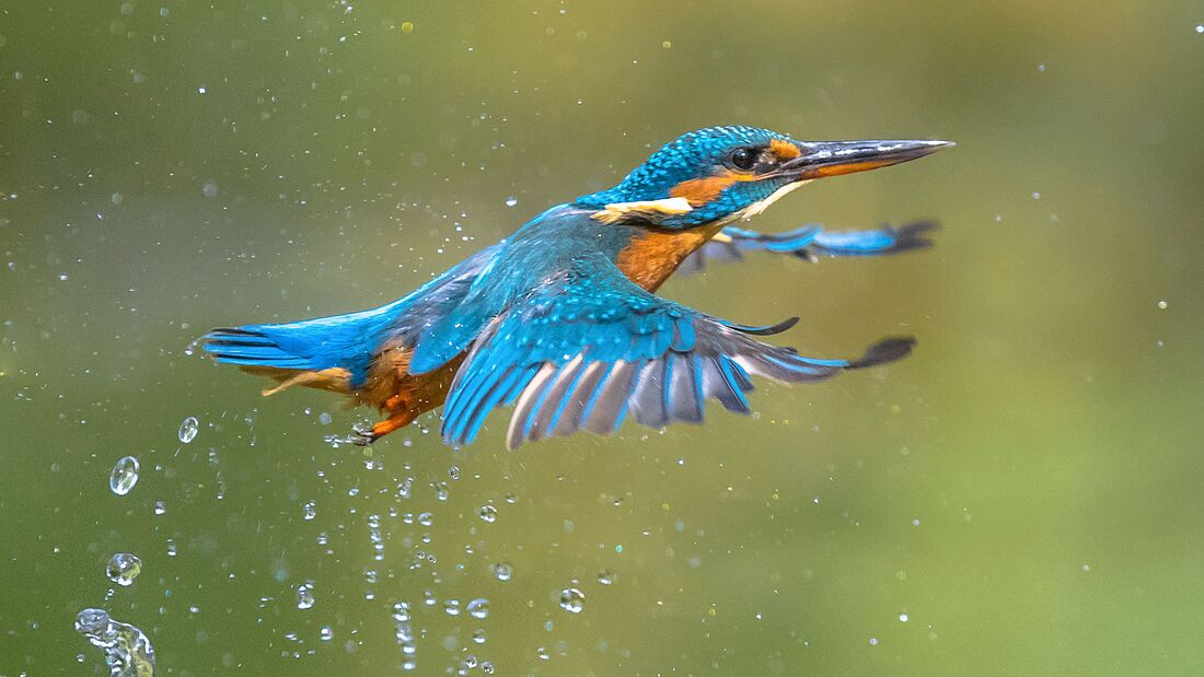 outddor eisvogel fotografie Shutterstock