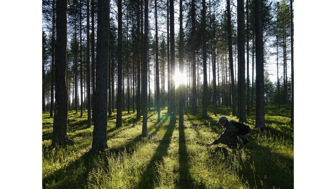 outdoor visit finland wald mensch kuusamo
