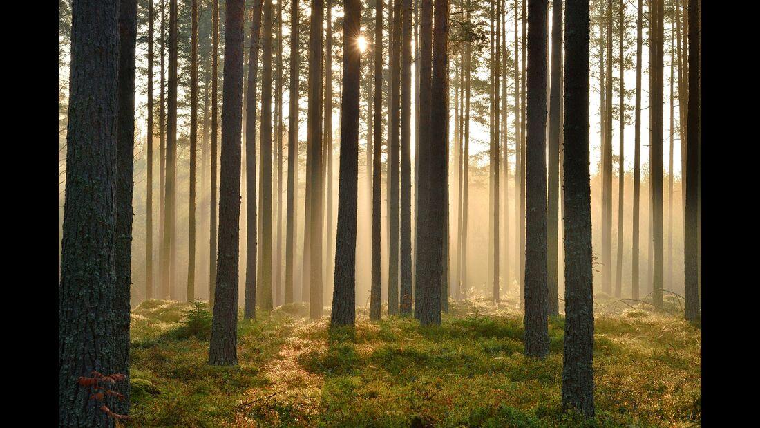 outdoor visit finland wald suovanlahti